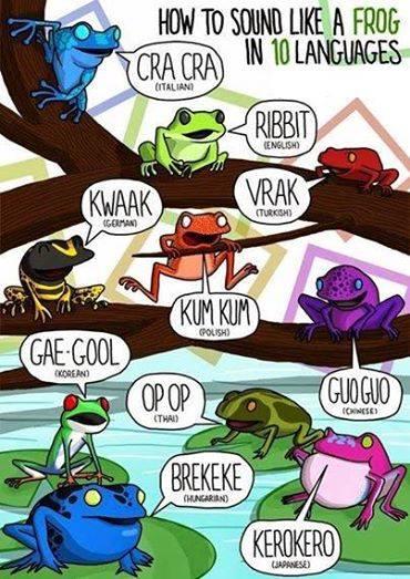 Le son de la grenouille en plusieurs langues