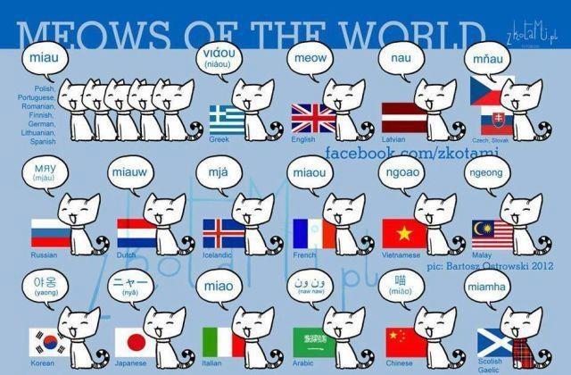 Miaou en plusieurs langues